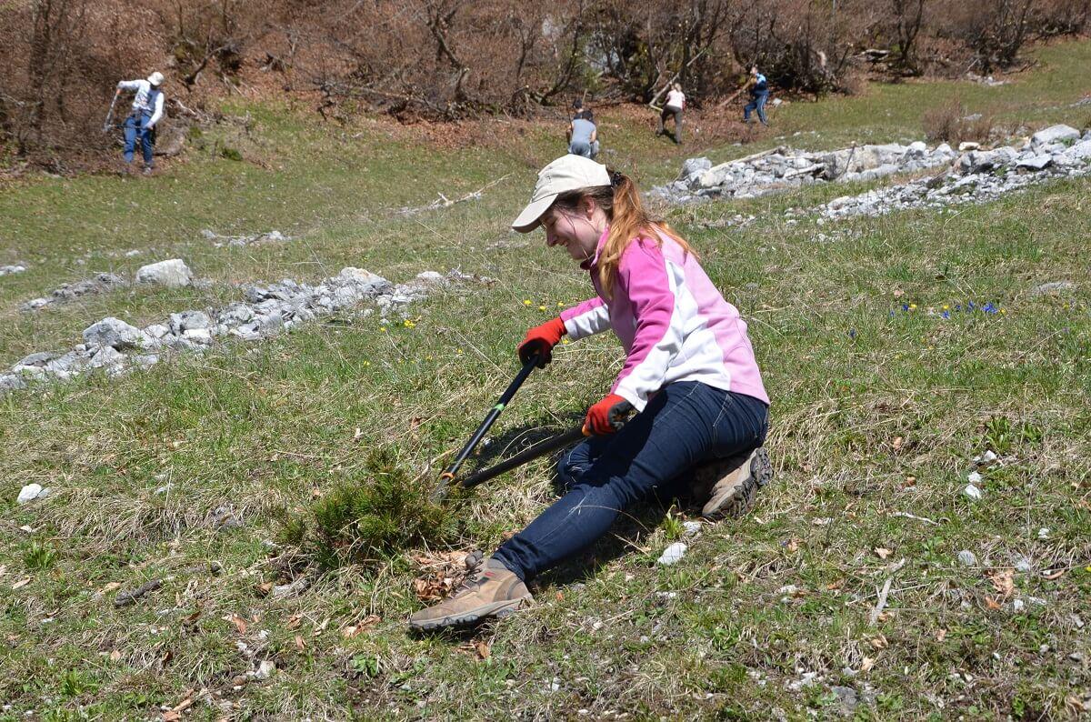 Freiwillige des Team Karwendel bei Almpflegemaßnahmen auf der Arzler Alm 2016