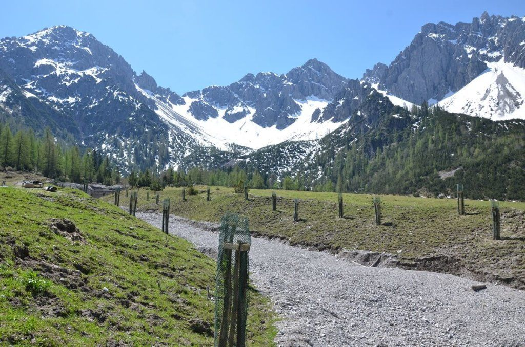 almpflege eppzirler alm 2016 2