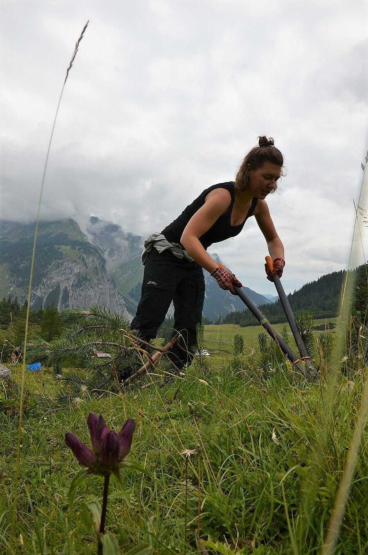 Team Karwendel bei der Almpflege auf der Ladiz Alm