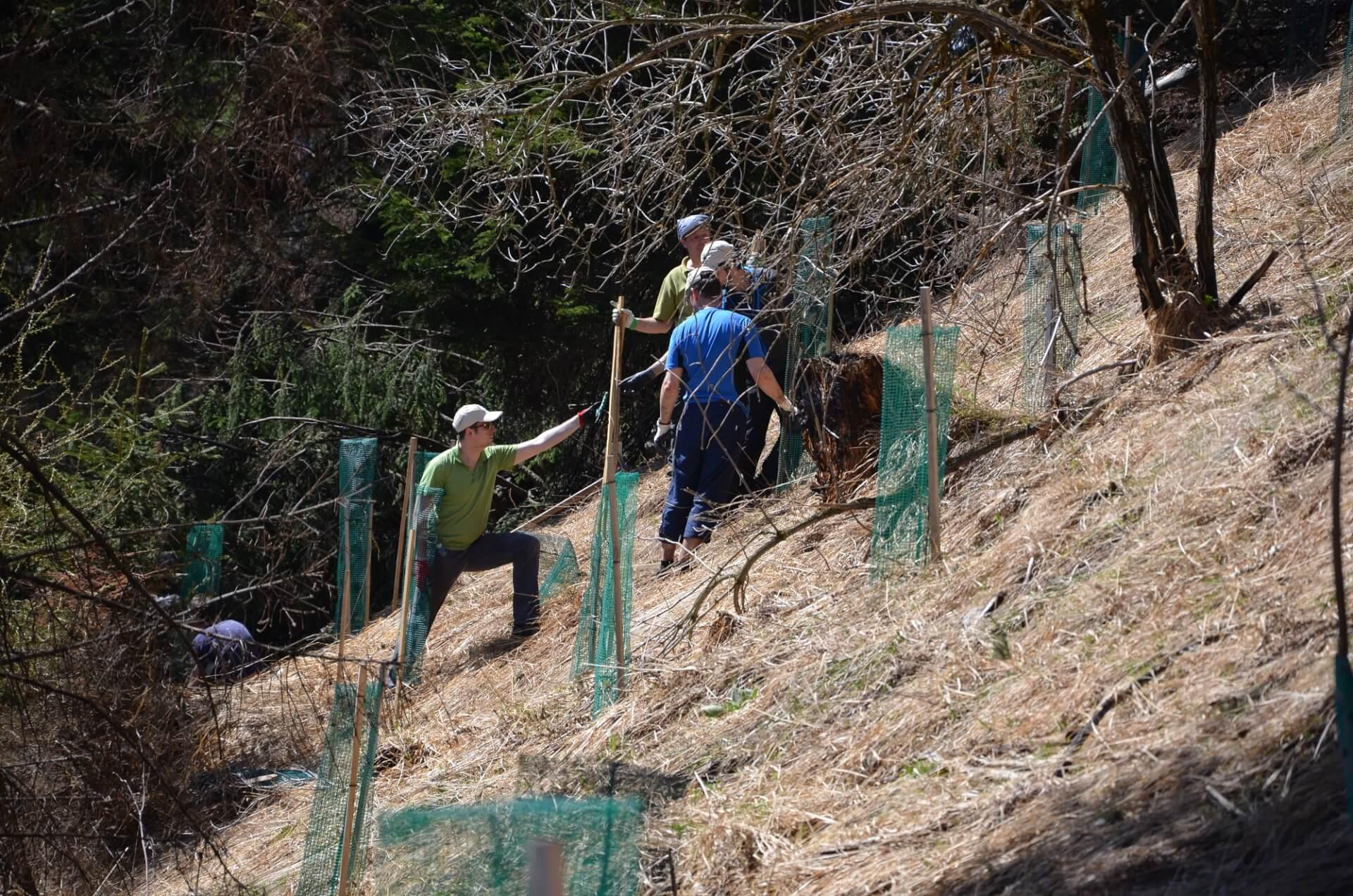 Team Karwendel bei Aufforstungsarbeiten nach dem Brand am Hochmahdkopf