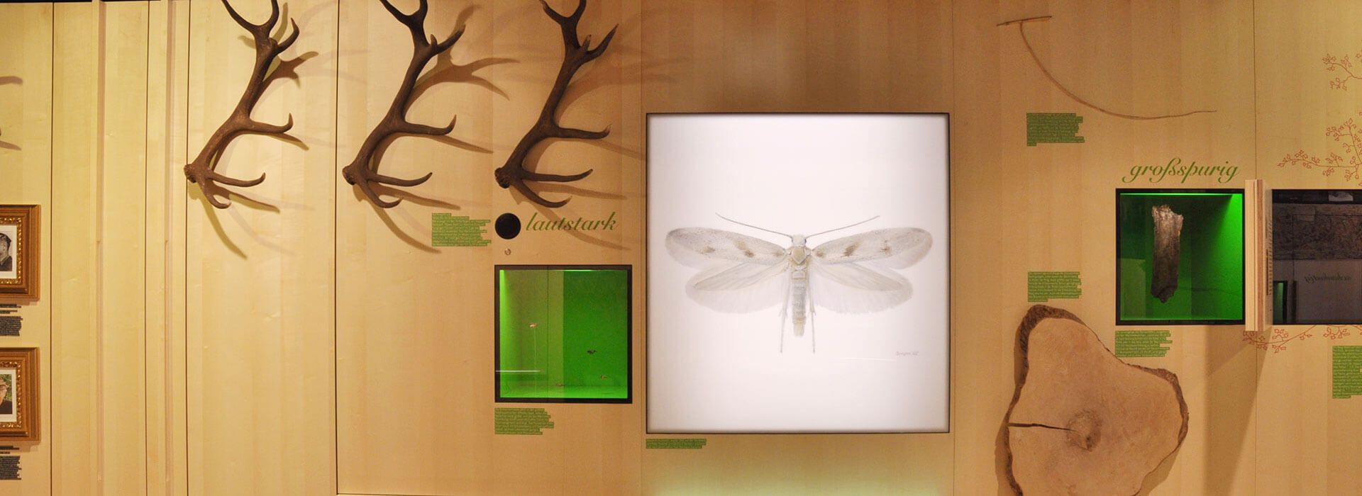 Ausstellung im Naturparkhaus