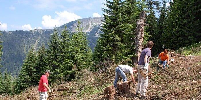 bergwaldprojekt 20112