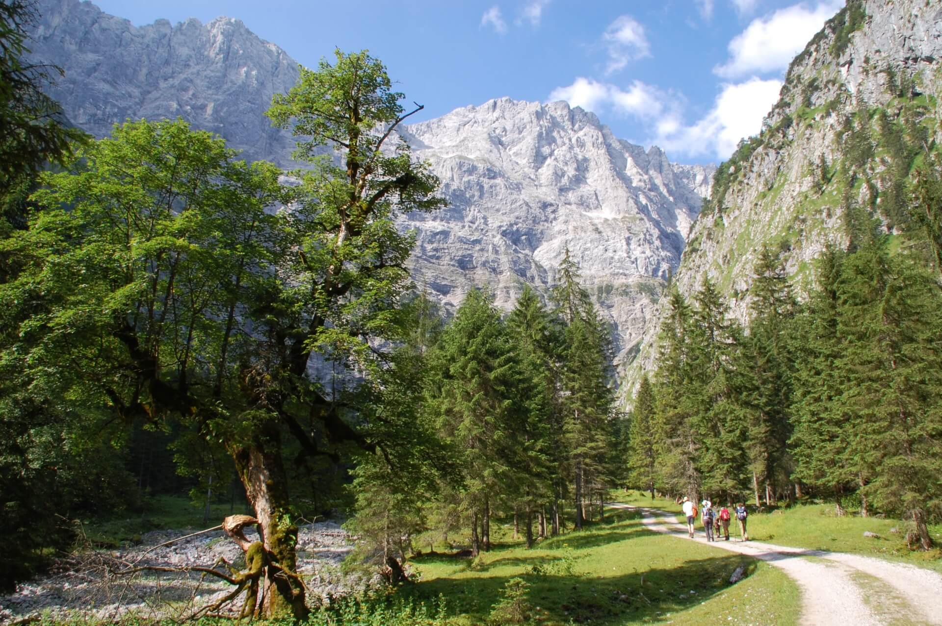 Bergwaldprojekt Hinterriß