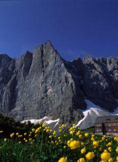 Falkenhütte mit Trollblumen im Vordergrund