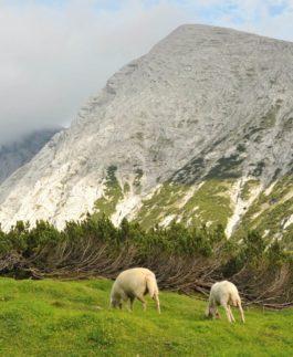 landschaftsschutzgebiet martinswand solstein reither spitze