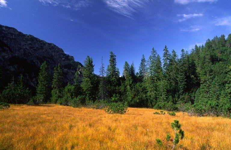 Naturschutzprojekt Moor