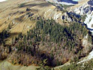 naturwaldreservat engalm
