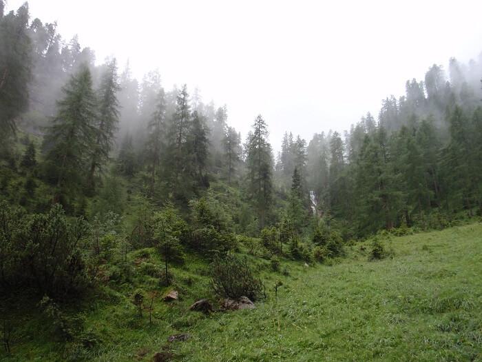 Naturwaldreservat Gumpenkopf