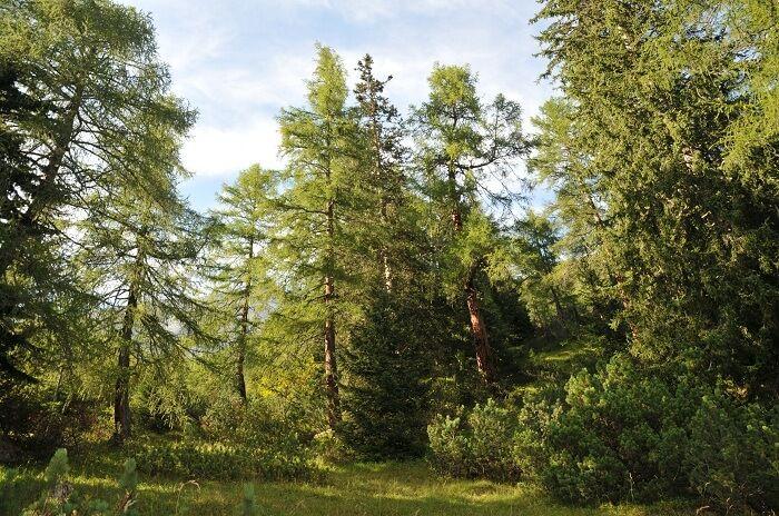 Naturwaldreservat Halltal