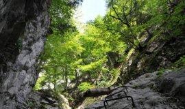 naturwaldreservat kranebitter klamm