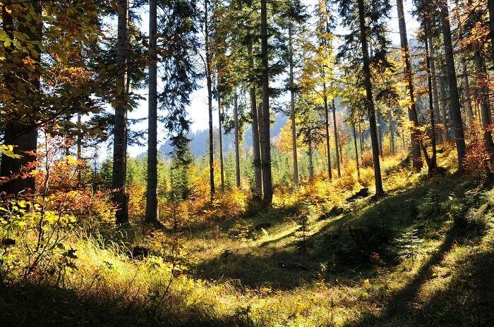 Naturwaldreservat Taschbachtal