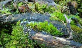 naturwaldreservat tortalalm 3