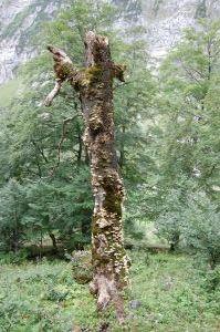 naturwaldreservat tortalalm