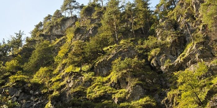 naturwaldreservat umlberg 2