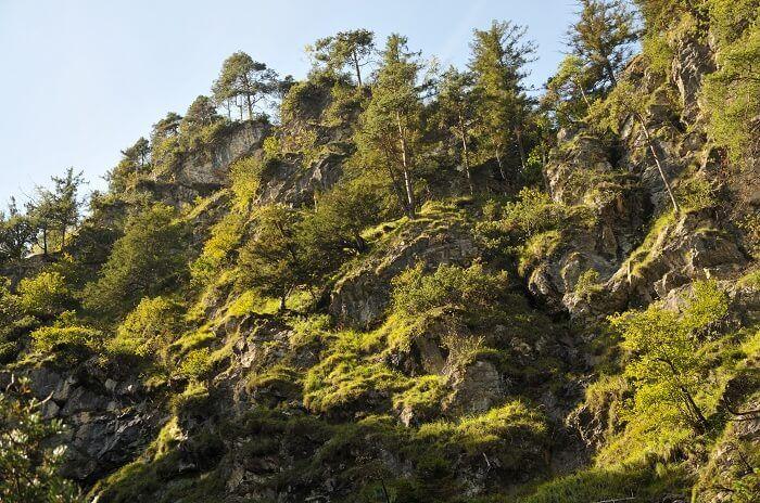 Naturwaldreservat Umlberg