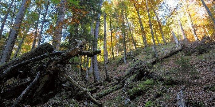 naturwaldreservat vomper loch 2