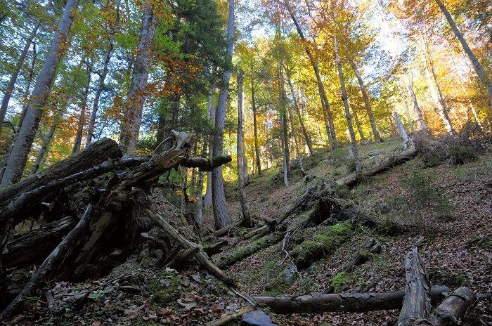Naturwaldreservat Vomper Loch