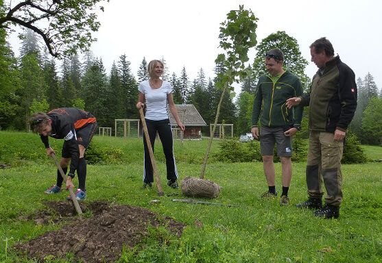Sieger des Karwendelmarsches pflanzen neue Ahornbäume am kleinen Ahornboden