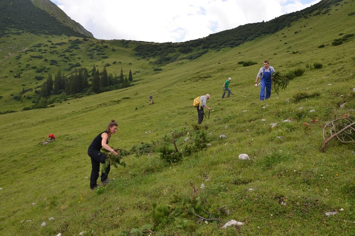 Mitglieder des Team Karwendel bei Pflegemaßnahmen auf der Ladiz Alm