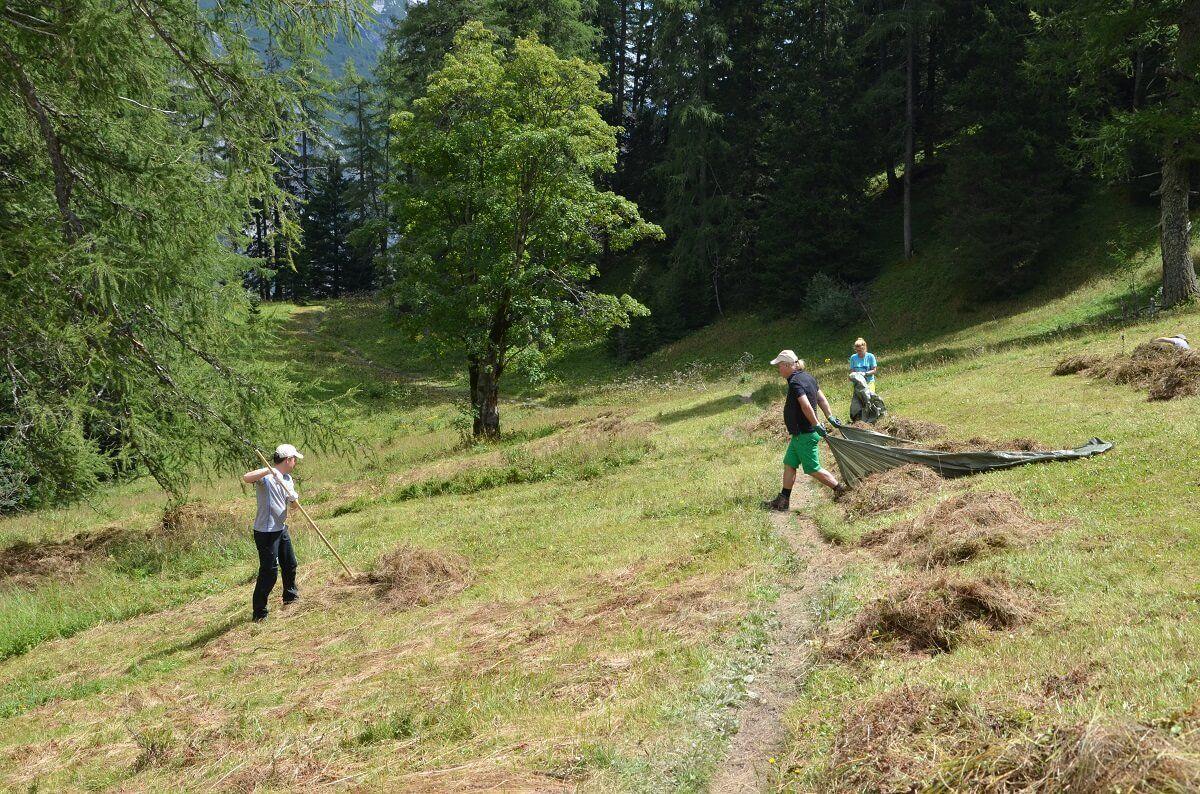 Das Team Karwendel beim Heuen am Issanger 2017